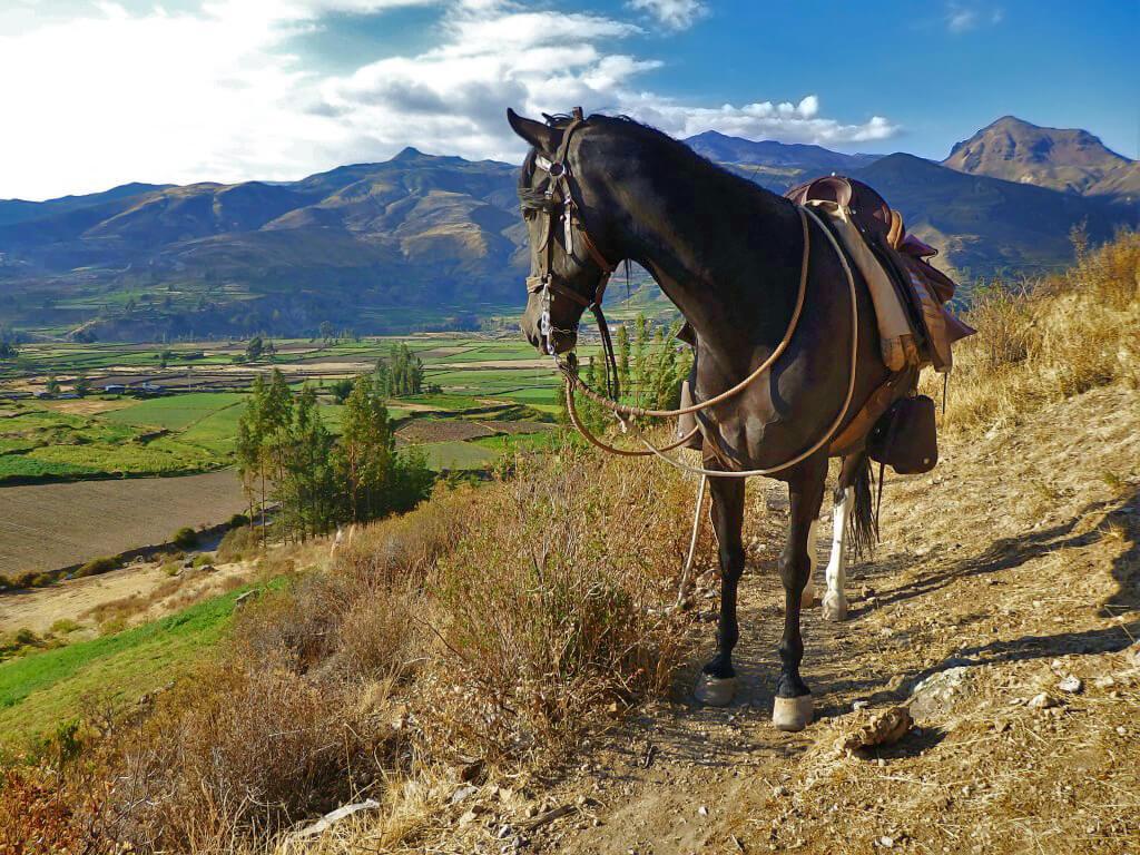 Faire du cheval dans le canyon de Colca au Pérou