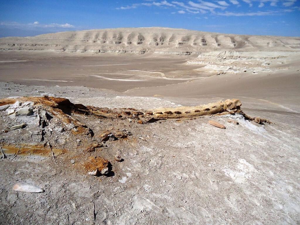 Chevauchées dans le désert et paléontologie au Pérou