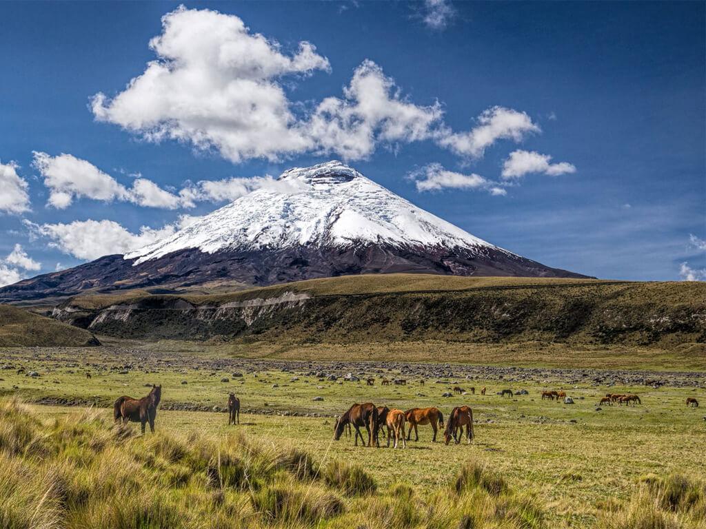 Rencontre avec les chevaux dans le Parc National Cotopaxi en Équateur