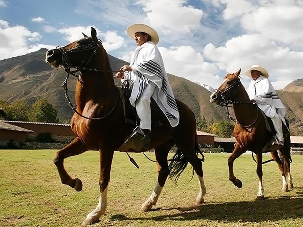 Chevaux péruviens de Paso