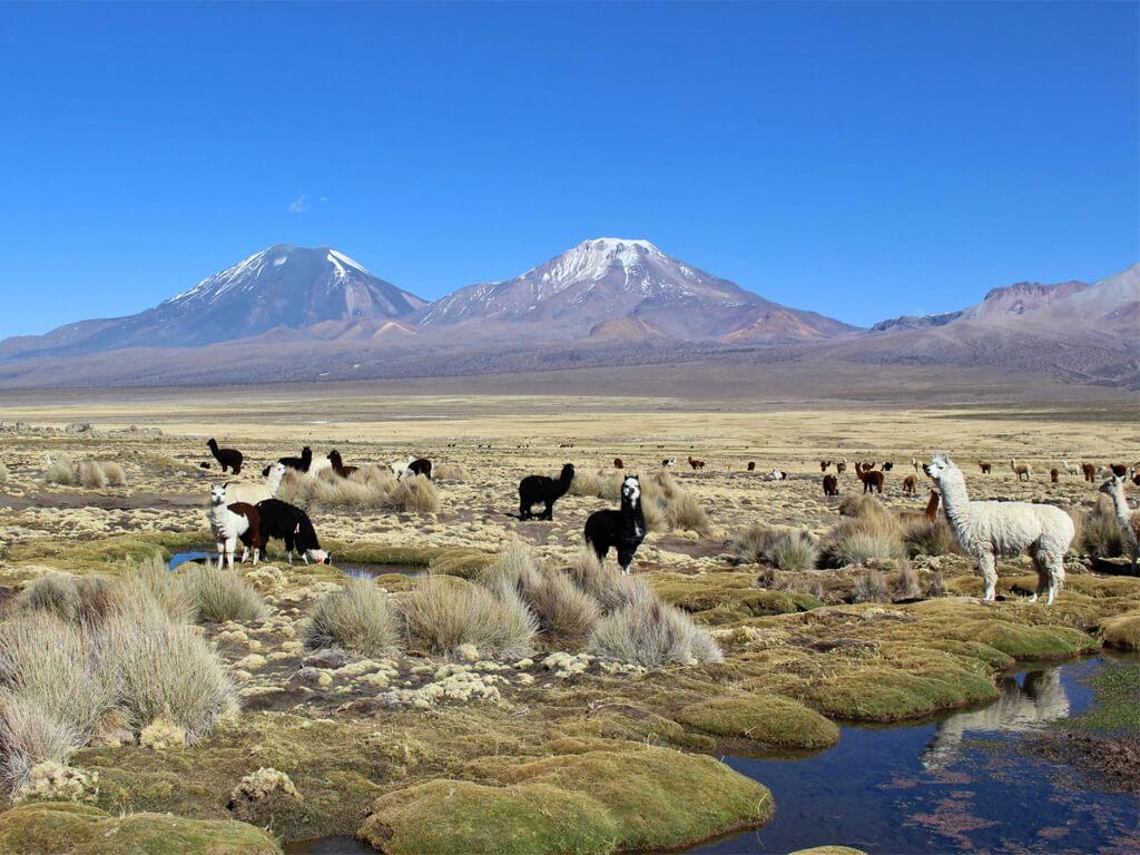 Circuit au Parc national Sajama en Bolivie
