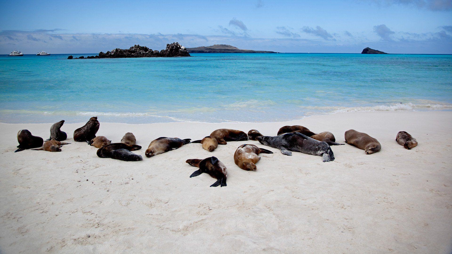 Une faune riche et endémique sur l'archipel des Galápagos