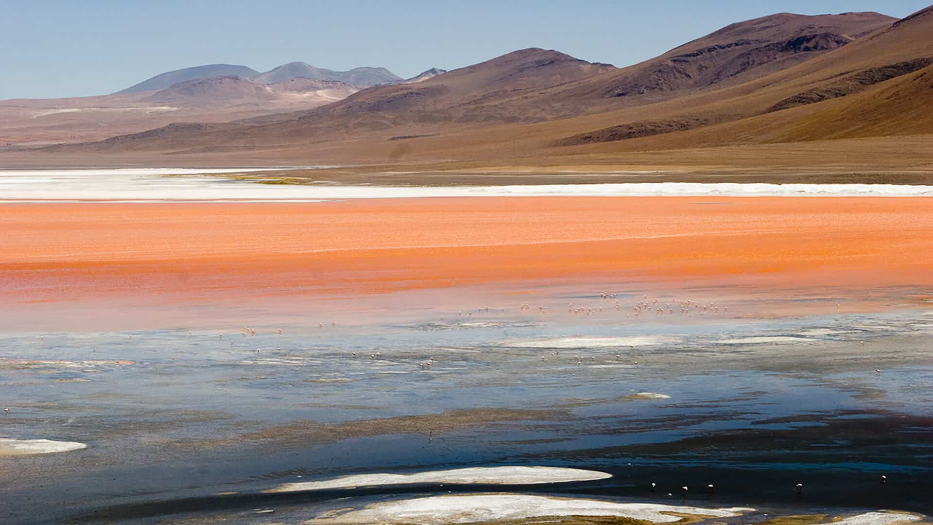 Laguna Colorada au Sud Lípez en Bolivie