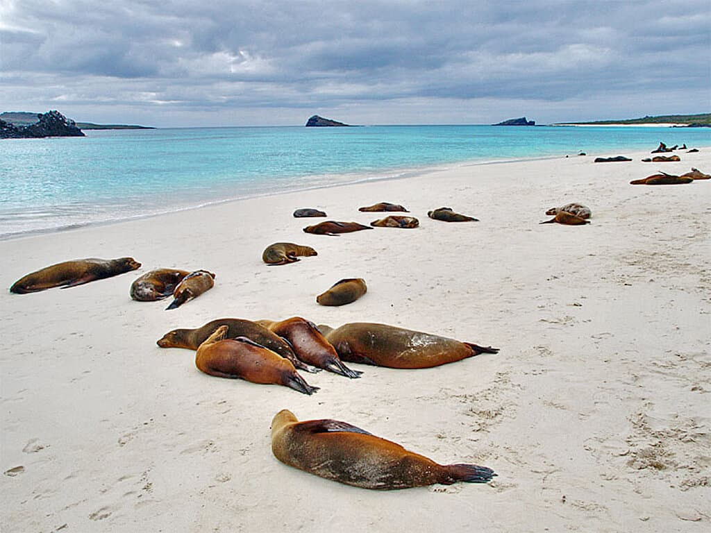Île Española aux Galápagos