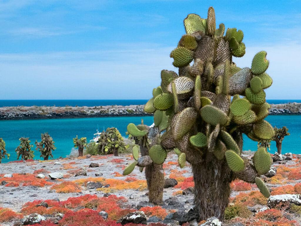 Cactus géants de l'île Santa Fe aux Galápagos