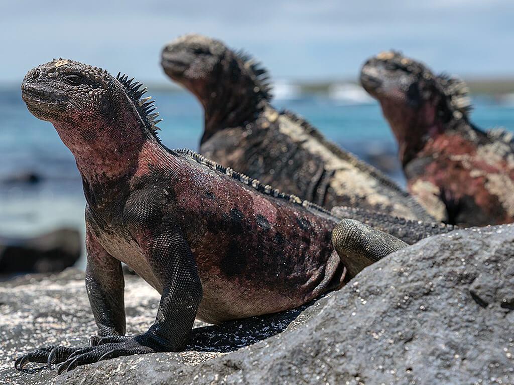 Îles de l'archipel des Galápagos en Équateur