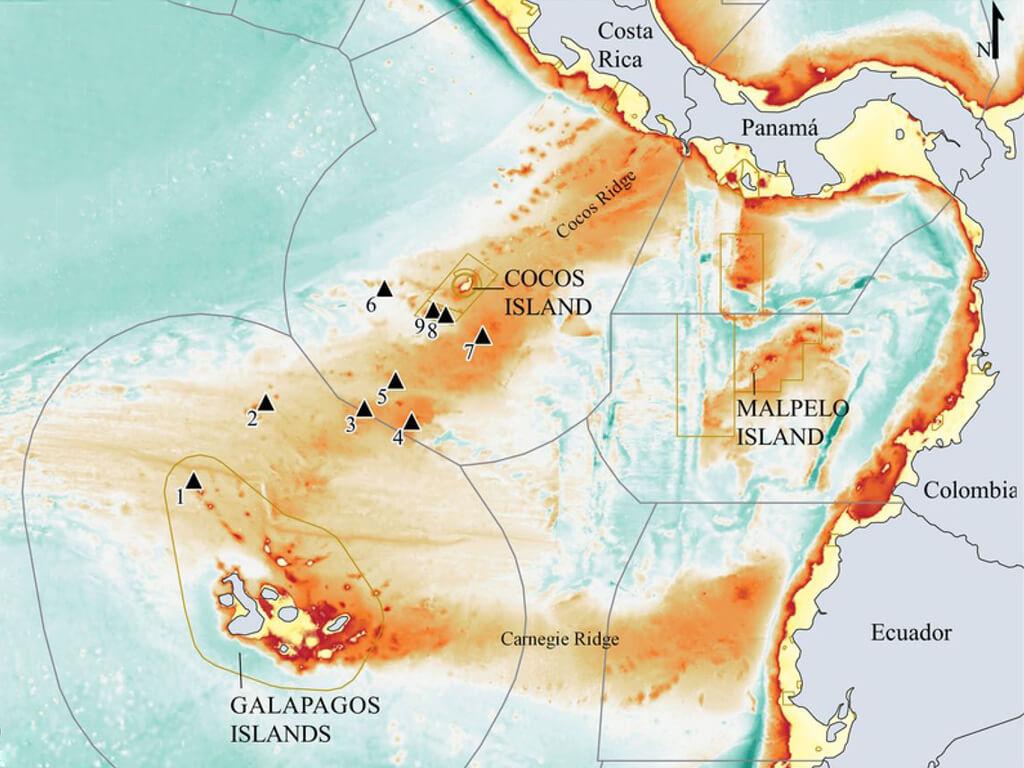 Îles Galápagos, Cocos et Malpelo pour observer des requins-marteaux