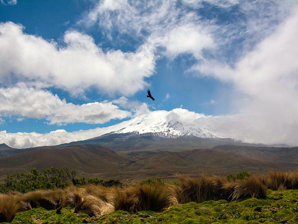 Observation du condor dans la réserve Antisana en Équateur