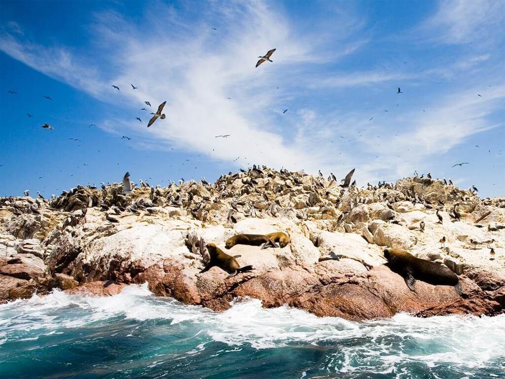 Oiseaux et loups de mer sur les îles Ballestas à Paracas au Pérou