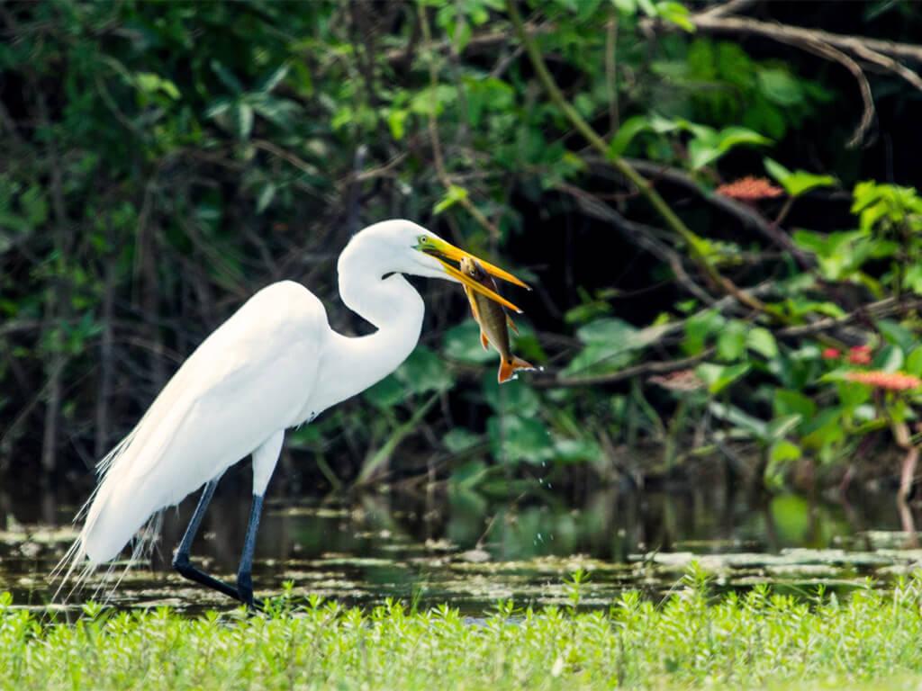 Photographier les oiseaux du Parc national Noel Kempff Mercado