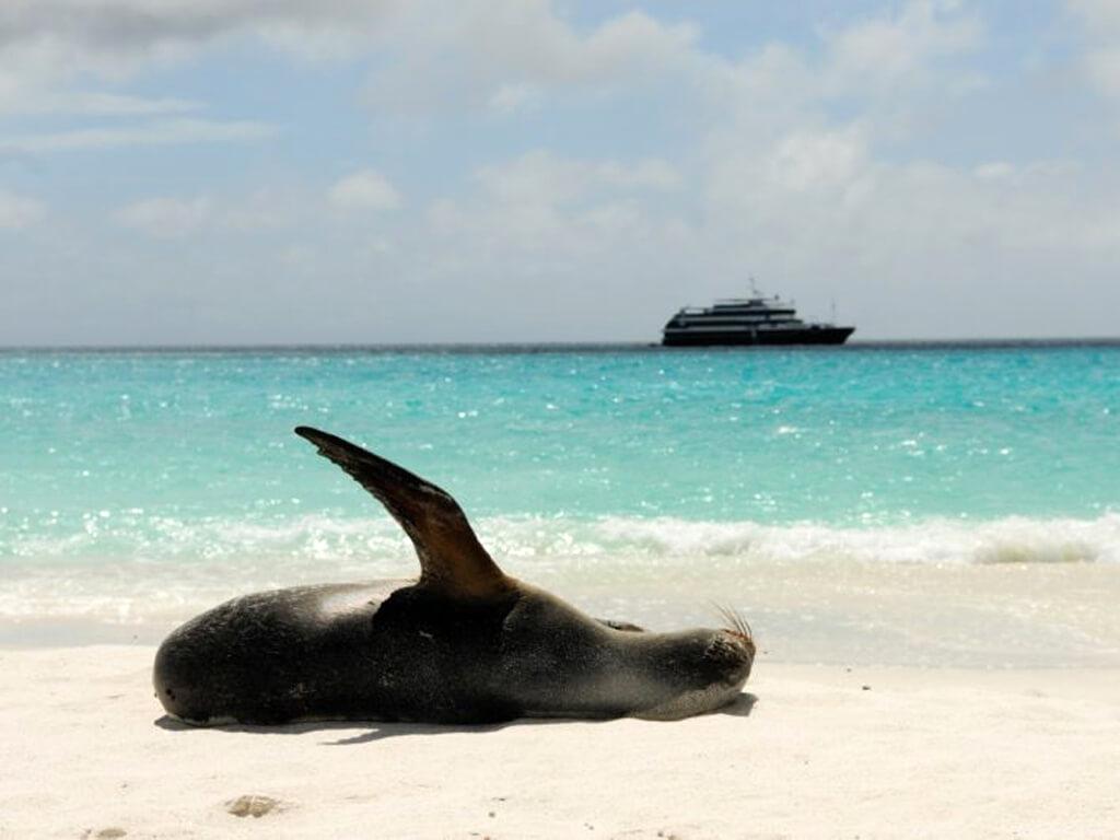 Une otarie des Galápagos se prélasse sur la plage