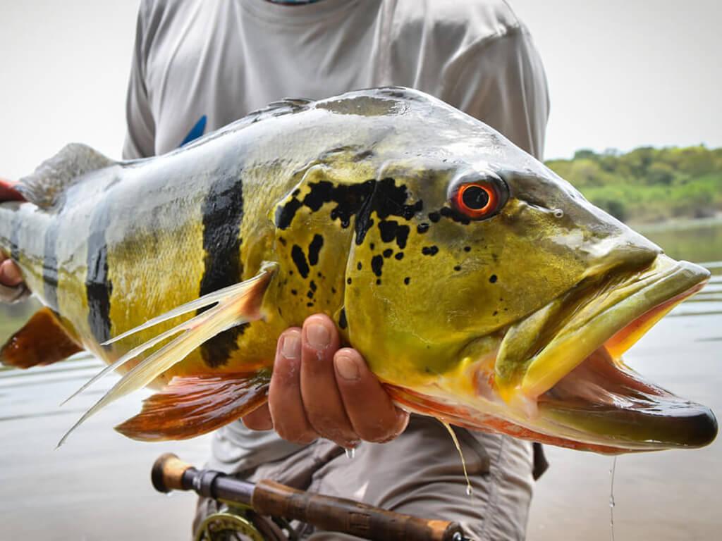 Pêche à Santa Cruz de la Sierra en Bolivie