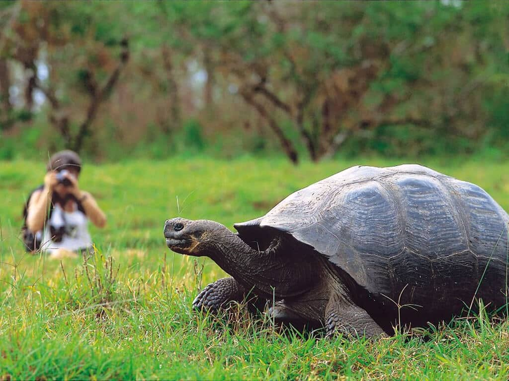 Photographier les tortues sur l'archipel des Galápagos