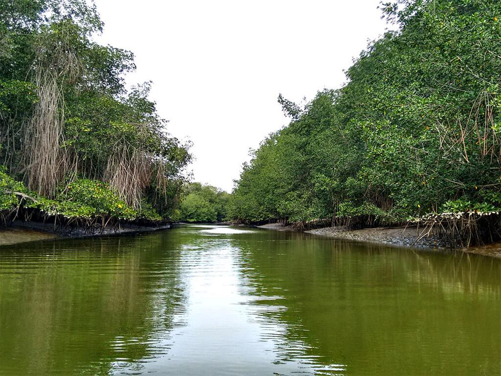 Sanctuaire national des mangroves de Tumbes au Pérou