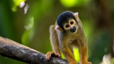 Amazonie bolivienne et sa faune
