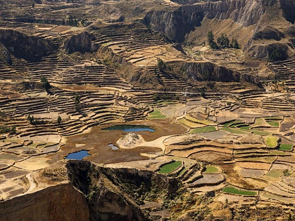 Terrasses de cultures dans le Canyon de Colca